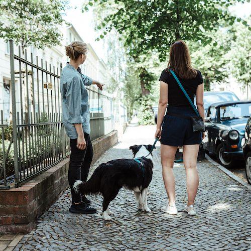 Hundeschule Potsdam 14